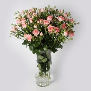 Boeket Femke; een trosroos met een zachtroze kleur. Deze roos heeft pioenachtige bloemen, prachtig groen blad en vele knoppen. Een pareltje in uw huis.